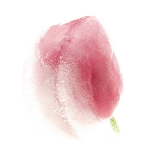 Pictorial. Тюльпан в розовом