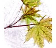 Pictorial. Молодые листья
